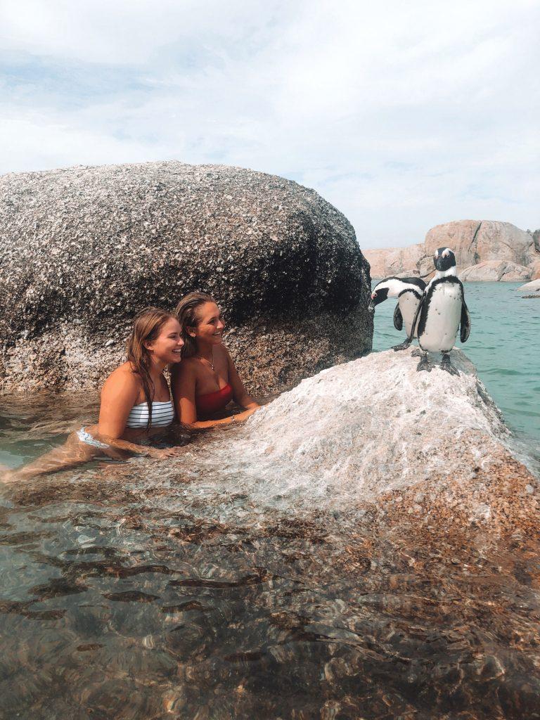 Bade-med-pigviner-i-SørAfrika---Jærenfhs
